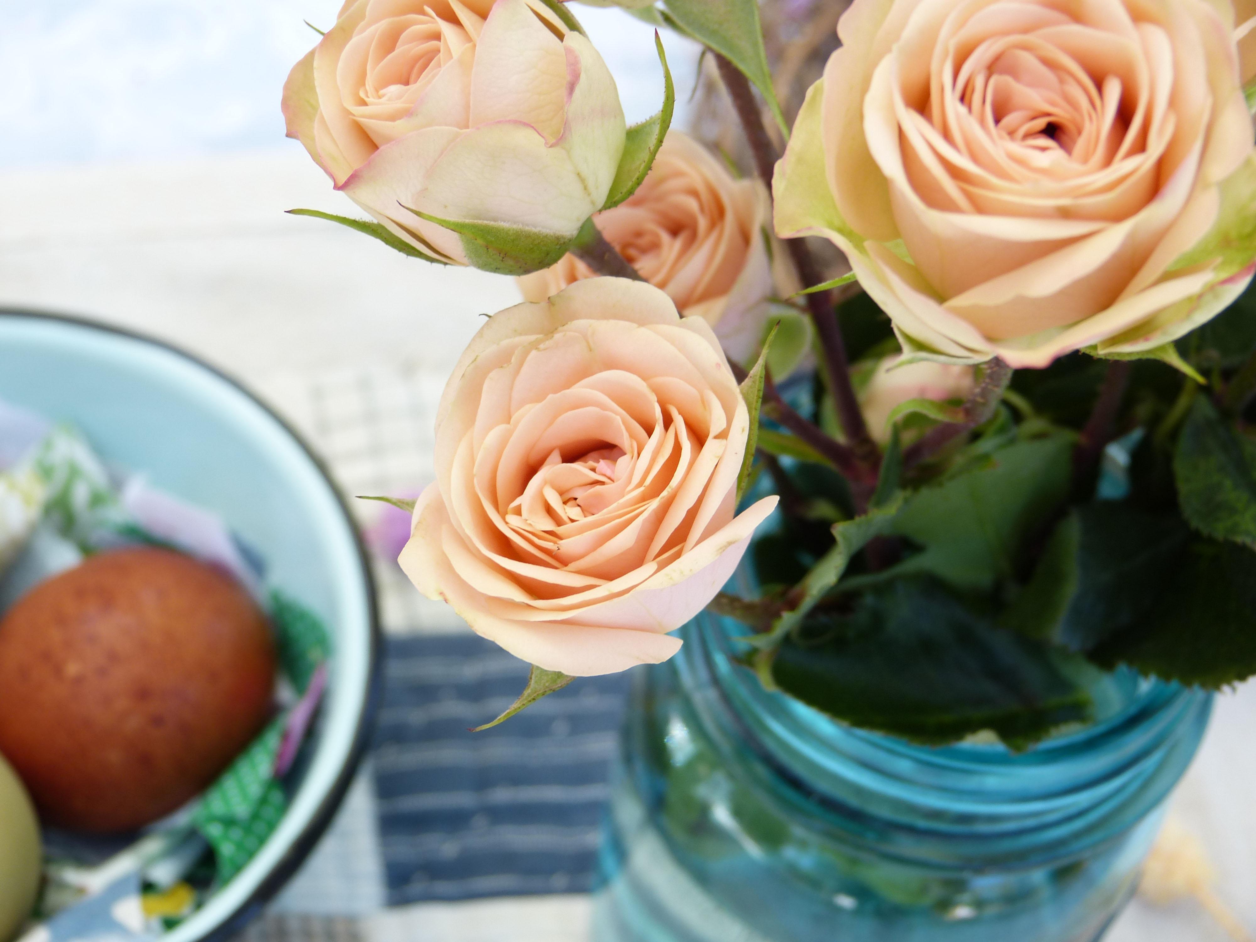 roses_18628bc